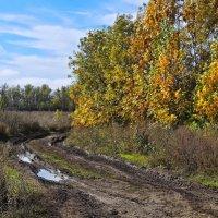Осенними дорогами.... :: владимир