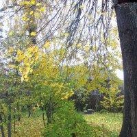 Осень за моим окном. :: Михаил Попов
