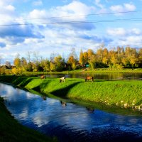 по берегам реки Тихвинки :: Сергей Кочнев