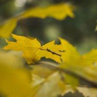 Желтый лист осенний :: Наталья