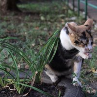 Умывающиеся кошка :: Elena Kashmareva