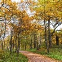 Осень в парке 9 :: Виталий