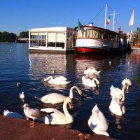 Лебеди на озере Альстер :: Nina Yudicheva