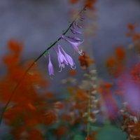 Вдохновившись цветом из кино (3) :: Иван Лазаренко