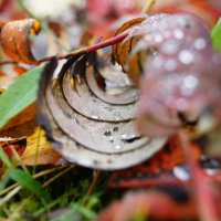 Осенние дожди. :: Andy Bayt