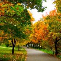 осень золотая :: Таня