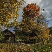 Осенние зарисовки... :: Ирина Елагина