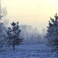 Морозный рассвет :: Екатерина Торганская