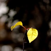 Осень :: Наталия