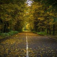 Осенняя дорога :: Алексей Строганов