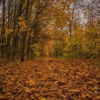 Дорога в осень :: Иван Анисимов