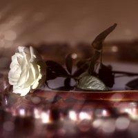 Романтическое настроение. :: Татьяна