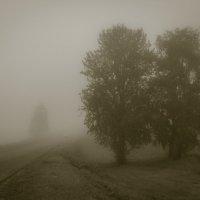 из тумана :: Ира Петрова