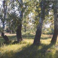 Солнечный сентябрь :: Наталия Сарана