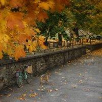 На дворе осень :: Екатерина Пономарева
