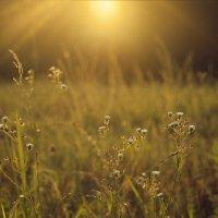 Купаться в лучах солнца это так здорово! Окунись и запомни это ощущение на всю зиму :) :: Виктория Велес