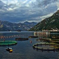 Montenegro- Черногория :: Владимир Сарычев