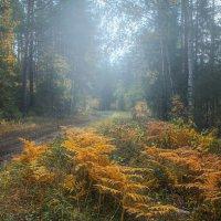 Осенний день :: vladimir Bormotov