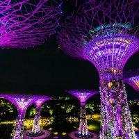 Marina Bay Sands :: Илья Лисаускас