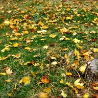 """На ковре из жёлтых листьев..."" :: Нина Корешкова"