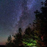 Ночь в лесу :: Александр Хорошилов