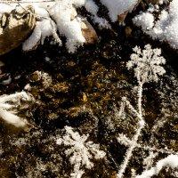 Зимние цветы :: Алексей (АСкет) Степанов