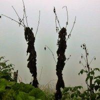 Силуэты в тумане :: Сергей Чиняев