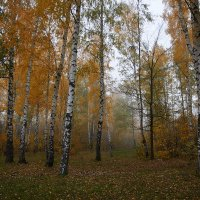 рассеивающийся туман :: Седа Ковтун