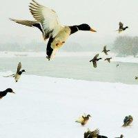 Ксения Кирилловых - зимовка