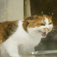 Осторожно! Злая кошка. :: Дмитрий Костоусов