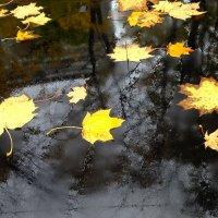 Осенние листья :: анна нестерова