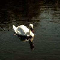 Лебедь замка Влюбленный ветер :: Екатерррина Полунина