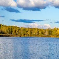 Лесное озеро. :: Vladimir Lazarev