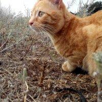 Лето в деревне кота Рыжика :: Татьяна Королева