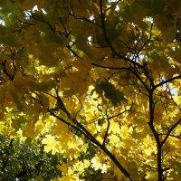 Солнце сквозь листья :: Gal` ka
