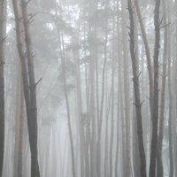 туман. :: Галина Фуникова