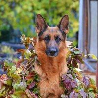 Любимая моя собака!!! :: Светлана Горячева