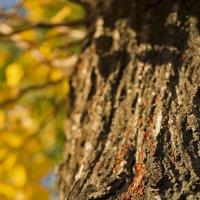 колония красноклопов в лучах осеннего солнца :: Андрей Франчук