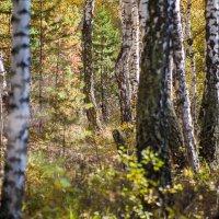 Осень пришла :: Евгений Мельников