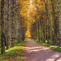 Осень на Берёзовой аллее :: Виталий