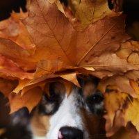 Девушка Осень :: Диана