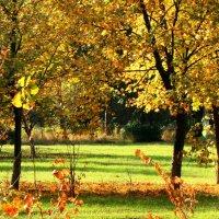 Осень :: Oleg Ustinov