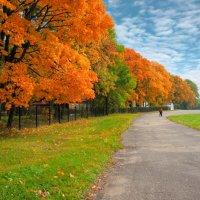 Осень цветастая. :: Laborant Григоров