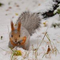С первым снегом! :: cfysx