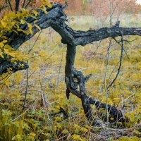 Осень :: Арина