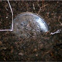 Одинокая Старинная Монета... :: Дмитрий Петренко