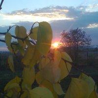 Осень на даче. :: Вячеслав Медведев