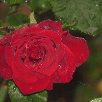 красный октябрь.. :: валя