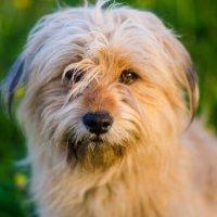 Собака в поле :: Юлия Михайлычева