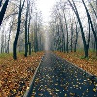 осень в парке :: Вадим Виловатый